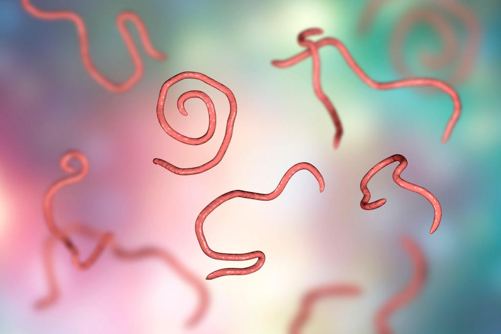 Могут ли глисты вызвать простатит импаза отзывы от простатита